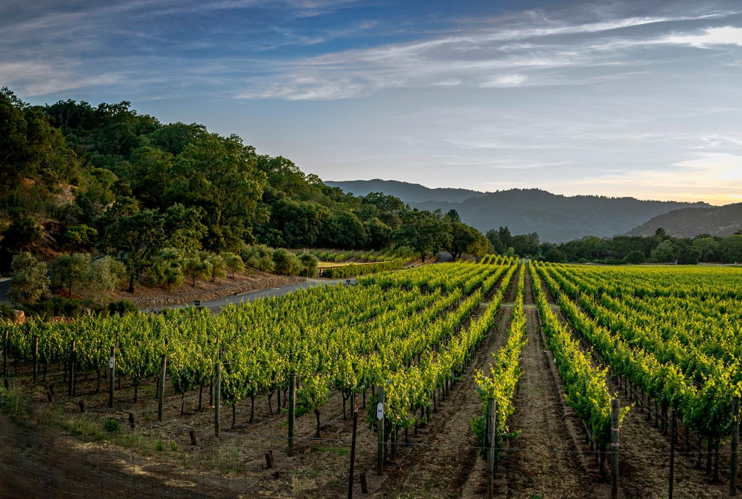 Orgullo por nuestra industria vitivinícola - Uruguay